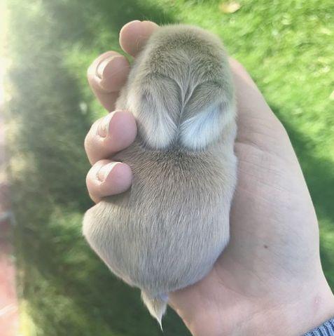 Честит Световен ден на животните!