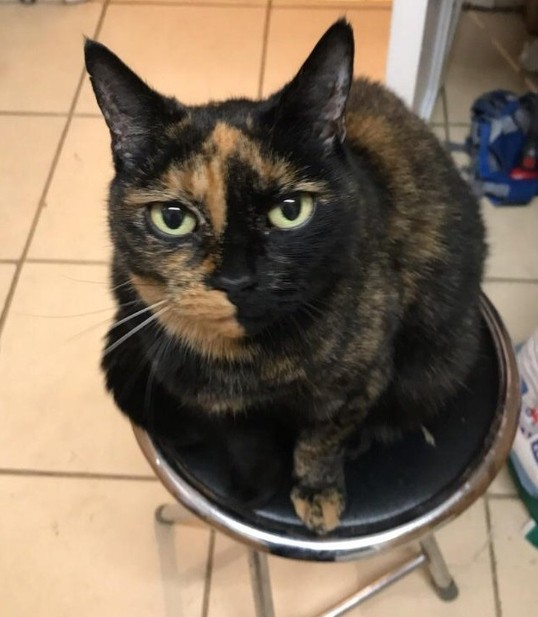 Най-сладките котета