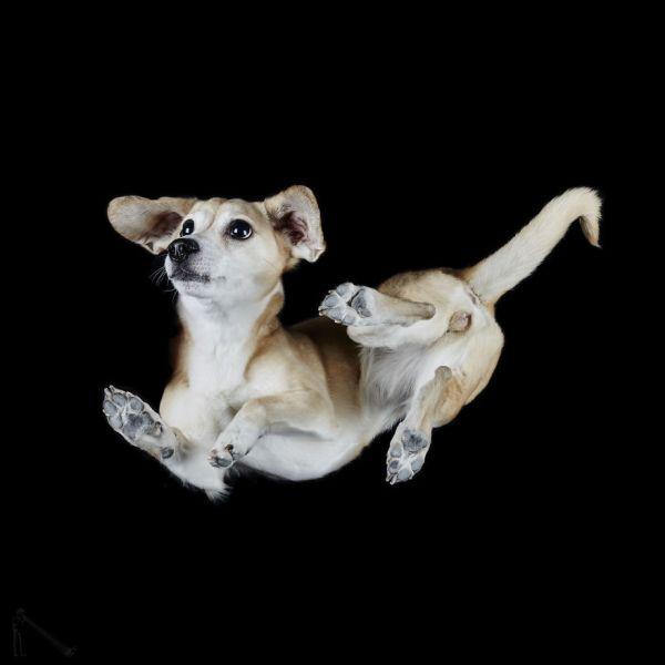 Кучета от нов ъгъл