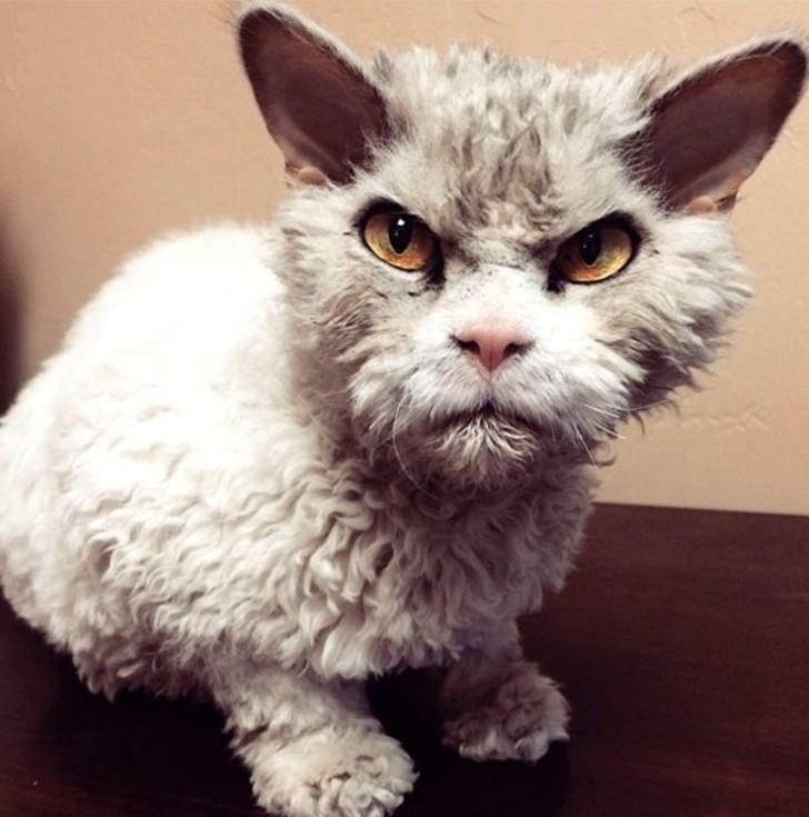 Най-красивите котки