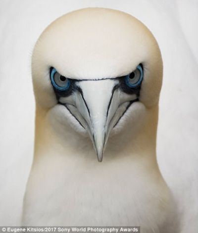 Морска птица