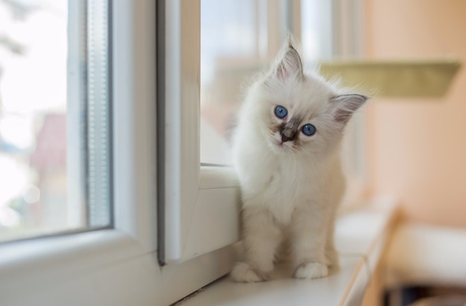 Най-красивите породи котки
