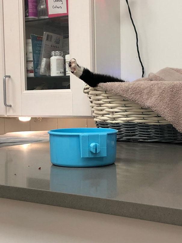 Котките и ветеринарите