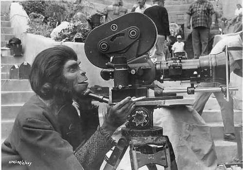 И маймуните могат да снимат