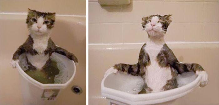Котките, които ще откраднат усмивката ти