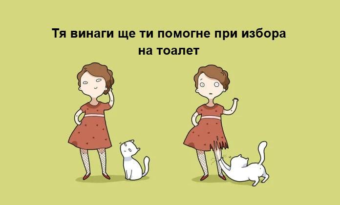 Котката е отличният домашен любимец