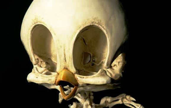 Как биха изглеждали скелетите на анимационните герои?
