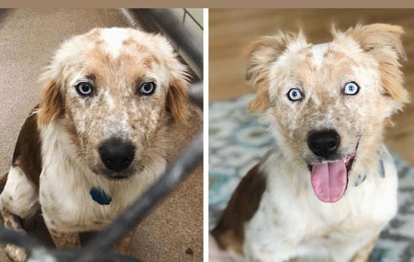 Истинско щастие: Как се променят кучетата, когато ги осиновят