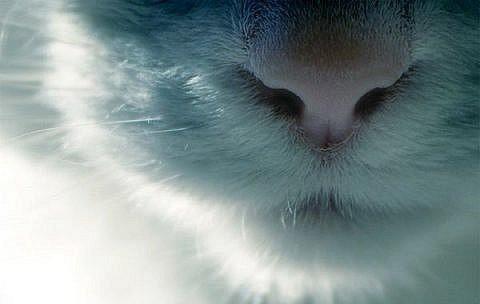 Мъркането на котките и лечебните им сили