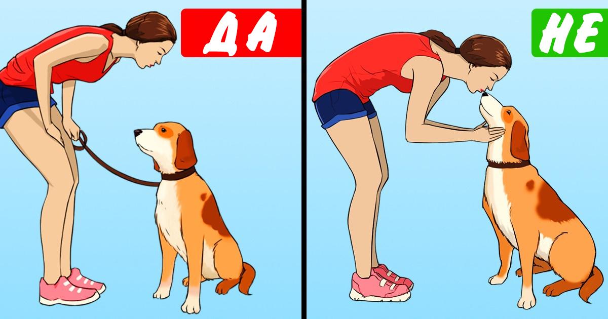 11 грешни начина, по които се грижите за кучето си