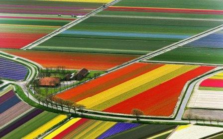 Уникални снимки на полетата с лалета в Холандия