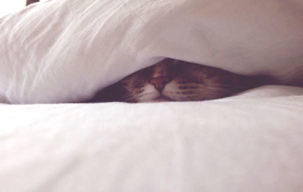Учените: Лягате си късно и ставате трудно сутрин? Значи сте по-интелигентни!